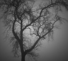 Cemetery Tree in The Fog by Sharon Hagler