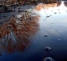 World in a Puddle by atoth