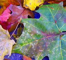 Colors of Brightness ! by Sharon Hagler