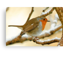 Robin on a frosty morning, County Kilkenny, Ireland Canvas Print