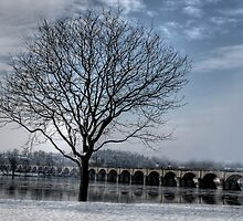 A TREE GROWS IN HARRISBURG by Diane Peresie
