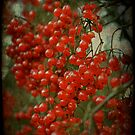 Red Berry Bokeh by Catherine Hadler