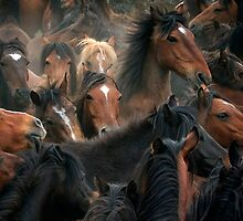 Spaniard Wild Horses 3 by Carlos Casamayor
