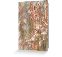 Seeds Greeting Card