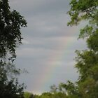 rainbow in the trees by Jeannie Matthews