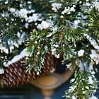 Christmas Wreath by Sandy  Taylor Photography