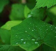 Raindrops Fallen on a Leaf by MsAshley