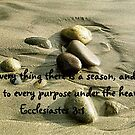 A Time To Every Purpose by Marie Sharp