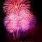 Blossom Bursts - Sydney Harbour - New Years Eve - Midnight Fireworks  by Bryan Freeman