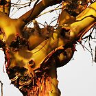 Arbutus Puzzle by TerrillWelch
