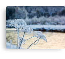 Winters Beauty Canvas Print