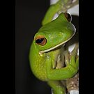 Tree Frog  by Ron  Wilson