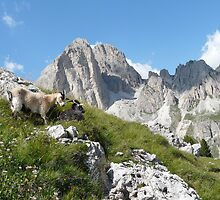 Mountain goats by pljvv