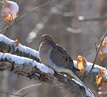 Lonesome dove by mltrue