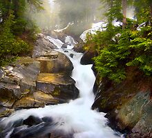 Paradise River Rainier National Park by cfkoonce
