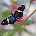 A Doris Longwing Butterfly by Robert deJonge