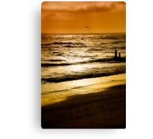 Golden evening Canvas Print