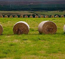 Bales of hay by Jaime Pharr