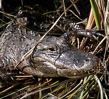 How Many Gators Do You See? by Gina Ruttle  (Whalegeek)