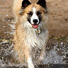 """A """"Secondhand"""" Dog~A Joyous Life by Gina Ruttle  (Whalegeek)"""