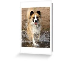 "A ""Secondhand"" Dog~A Joyous Life Greeting Card"