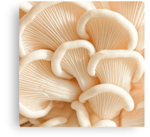Marvelling the Mushroom - II Canvas Print