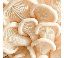 Marvelling the Mushroom - II Photographic Print