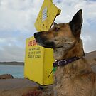 Life Guard on Duty at Esperance, Western Australia by rhizome