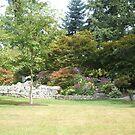 Evergreen Arboretum Beauty by Edith Farrell