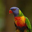Rainbow Lorikeet by NickBlake