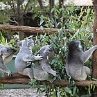 Five Koalas Sitting on a Branch by Robert Stephens