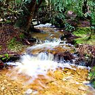 Rainforest stream, Cradle Mountain, Australia by Deb22