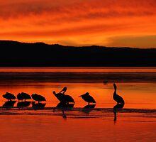 Pelican Paradise by emmmee