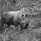 Rhino, Pilanesberg Park, South Africa by Mick Yates