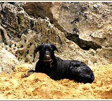 Beach Pup by dozzam