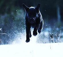 Dog from the dark by Alan Mattison
