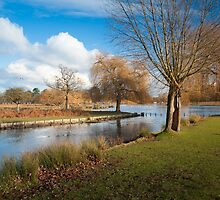 Bushey Park, Hampton Court, London. UK by DonDavisUK