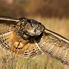 Eagle owl by AngiNelson
