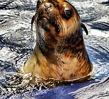 Soggy Seal by WendyJC