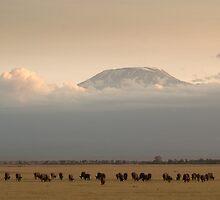 Mt. Kilimanjaro, Africa by Cameron Nicol