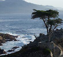 The Lone Cypress by KaraKeene