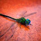 Green Dragon by Trevor Murphy