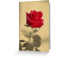 Red Rose Flower Isolated on Sepia Background Greeting Card