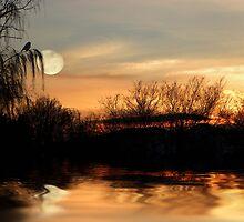 One Splendid Pond by digitalmidge