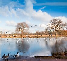 Bushey Park Lake in Winter by DonDavisUK