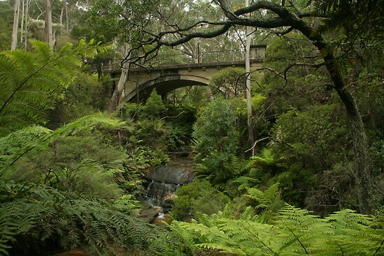 Leura Cascades curves by Michael Matthews