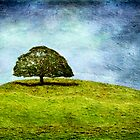 The Gathering Tree by scottimages