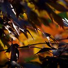 Orange leaves by portokalis