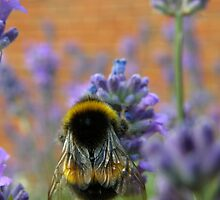 Busy Bee by IngridSonja