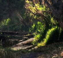 Pathway to the Dell... by GerryMac
